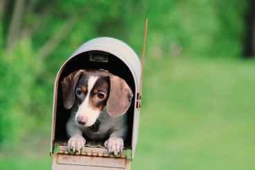 dog inside mailbox